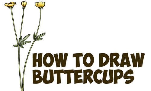 step by step instructions on flowers