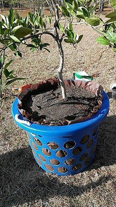 diy self watering styrofoam planters for tomatoes canada instructions