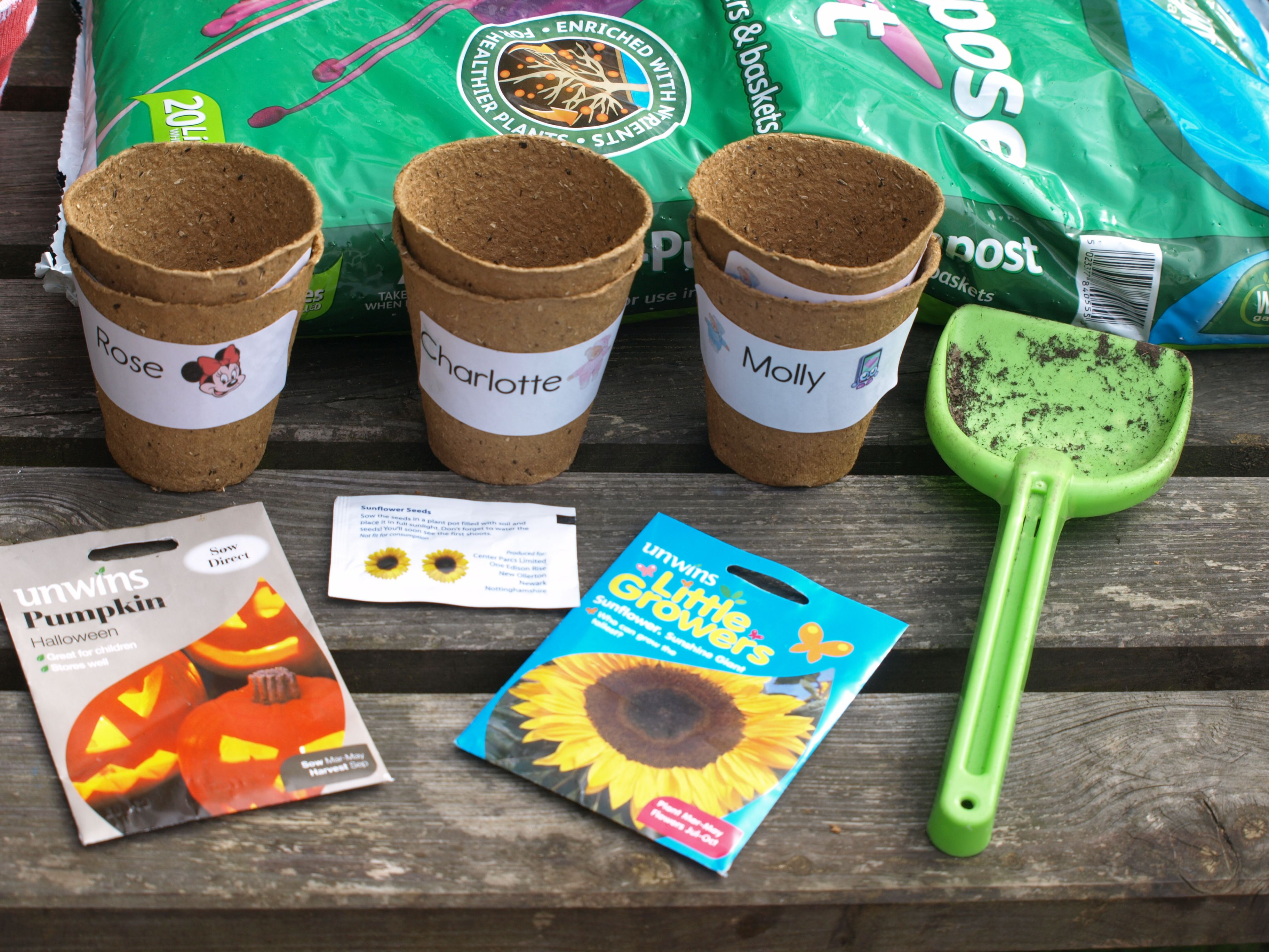 planting sunflower seeds instructions